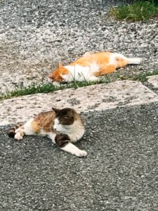 まったり外猫